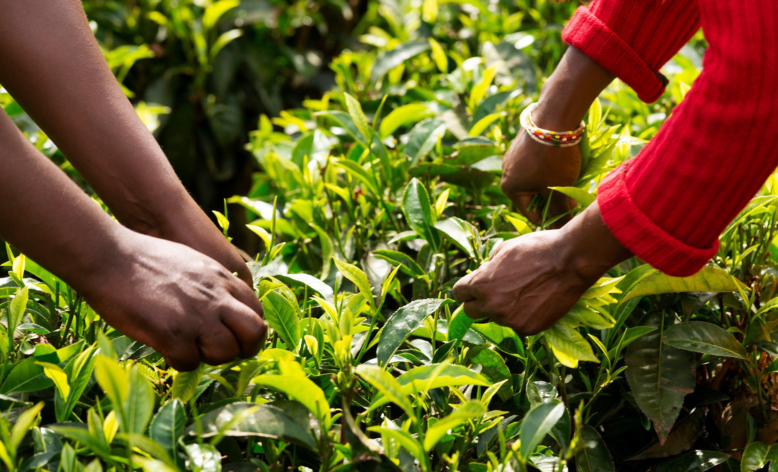 Rwandan-Ginger-Tea-Kigali