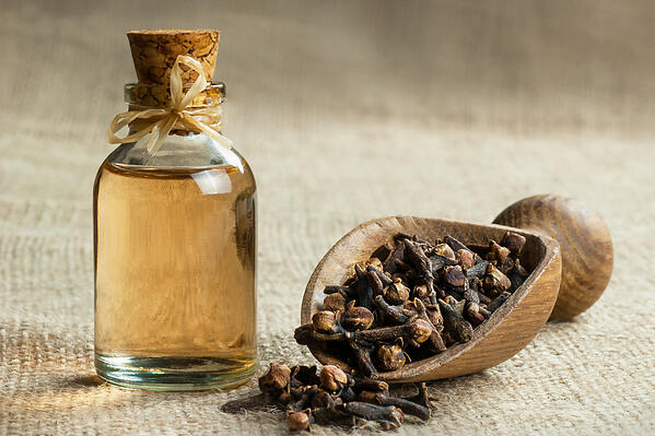 clove-and-clove-oil